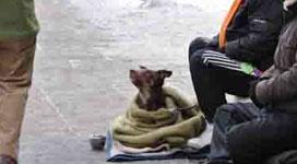 obdachlose-mit-hund-in-der-city_soziale-hilfe